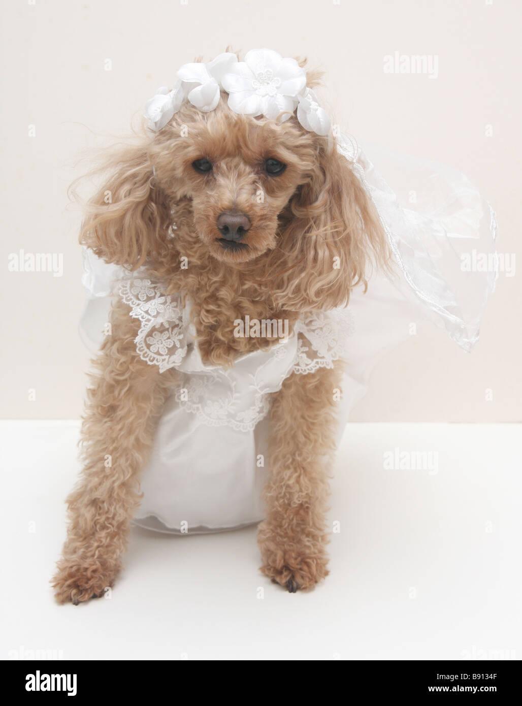 Niedlich Hund Partykleid Fotos - Brautkleider Ideen - cashingy.info