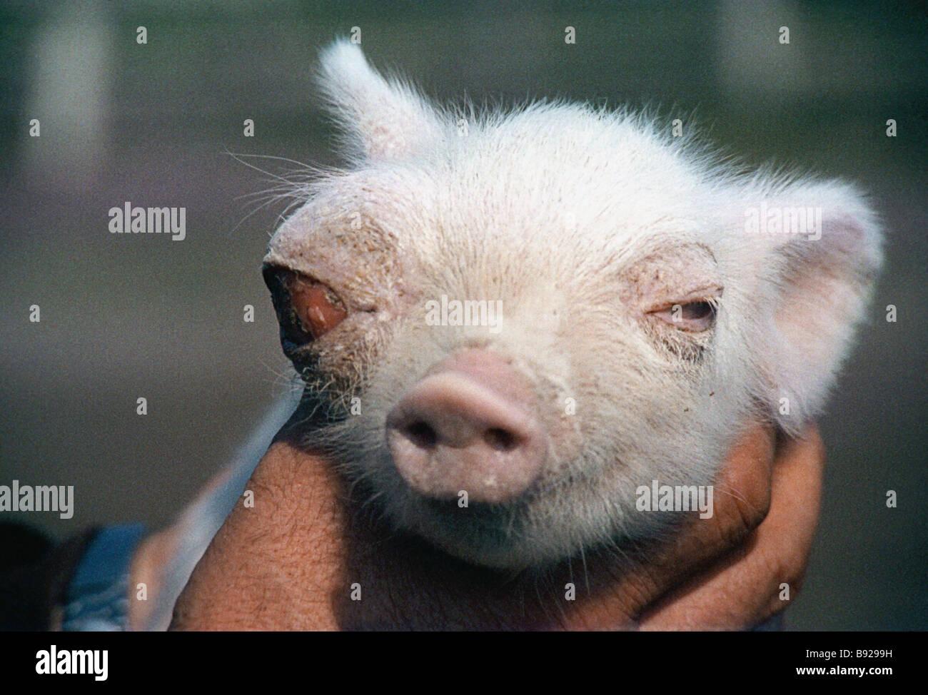 Berühmt Schwein Draht Käfig Zeitgenössisch - Elektrische Schaltplan ...