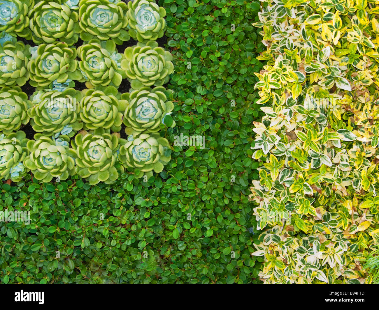 gr npflanzen sukkulenten grab trendvortr ge symmetrische felder rasen grabbeigaben garten. Black Bedroom Furniture Sets. Home Design Ideas