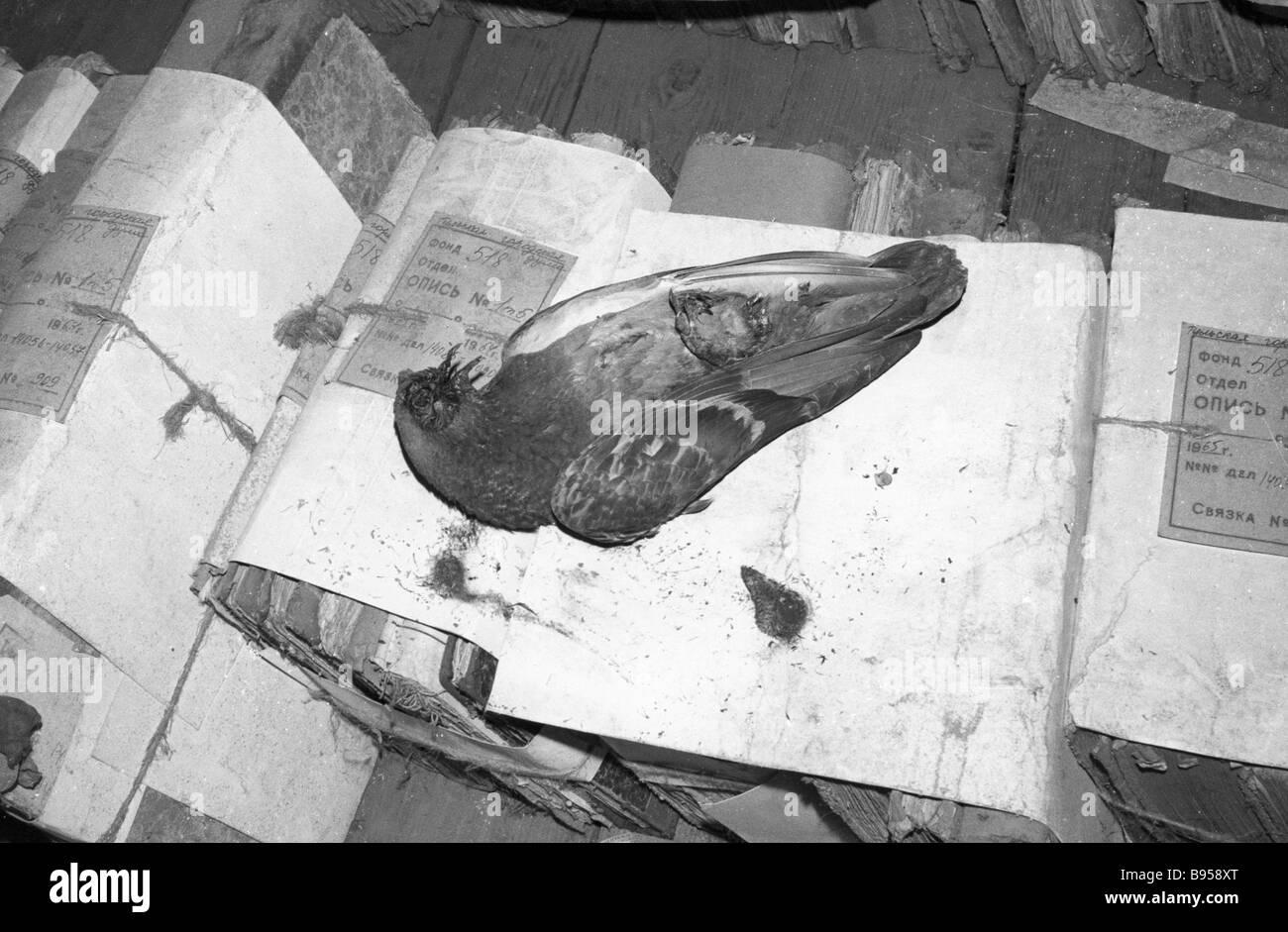 Eine Taube von Erkältungen in den Räumen der Tula Archiv getötet Stockbild