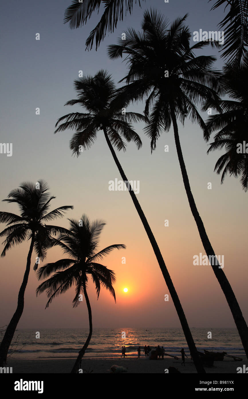Indien Goa Colva Beach Coconut Palm Grove Sonnenuntergang silhouette Stockfoto