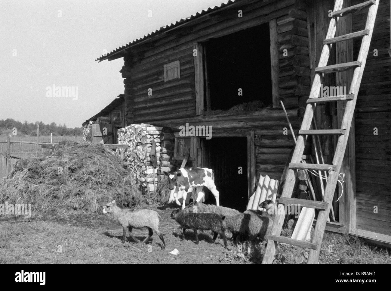 Eine Karelische Gehöft Stockbild