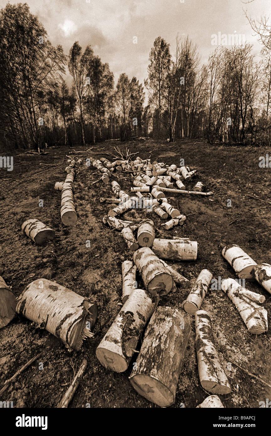 Baum Fällen in Kirov Region der 1990er Jahre Stockbild