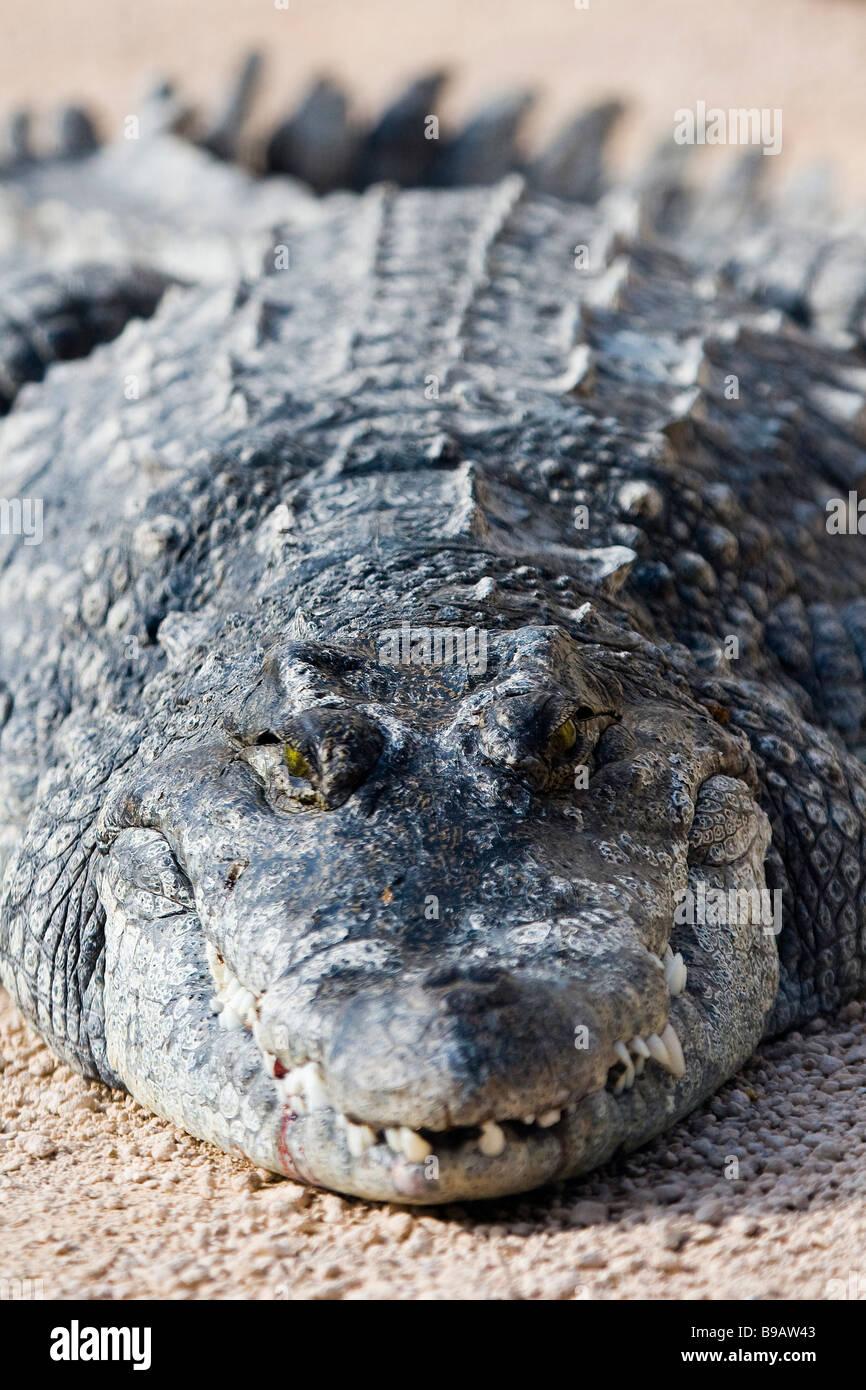 Ziemlich Krokodil Färbung Seite Fotos - Entry Level Resume Vorlagen ...