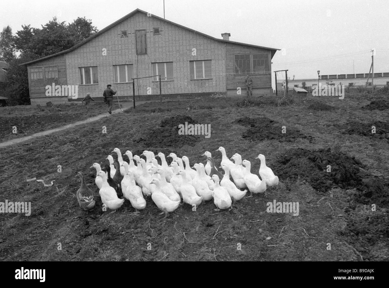 Ein privater Landwirt s Gehöft in der Nähe von Moskau Stockbild