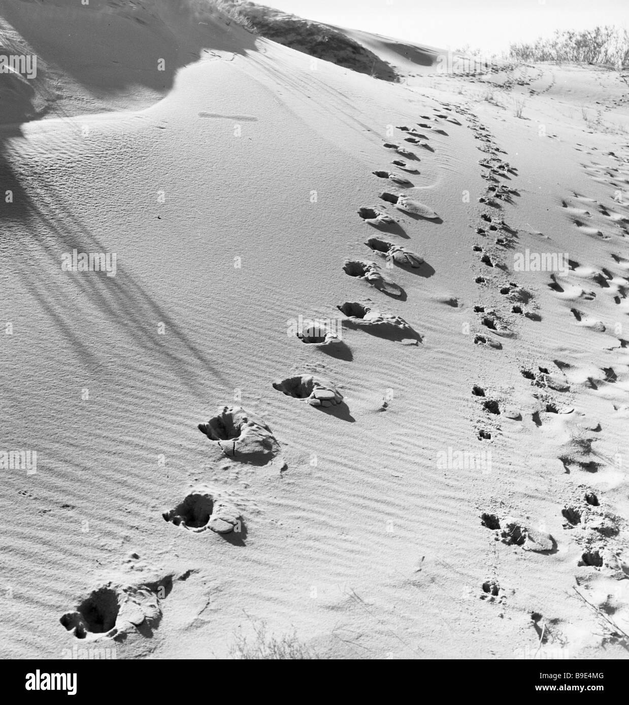 HUF-Drucke im Sand der Kurischen Nehrung Stockbild