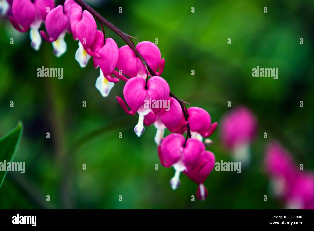 Blumensorte Stockfotos & Blumensorte Bilder