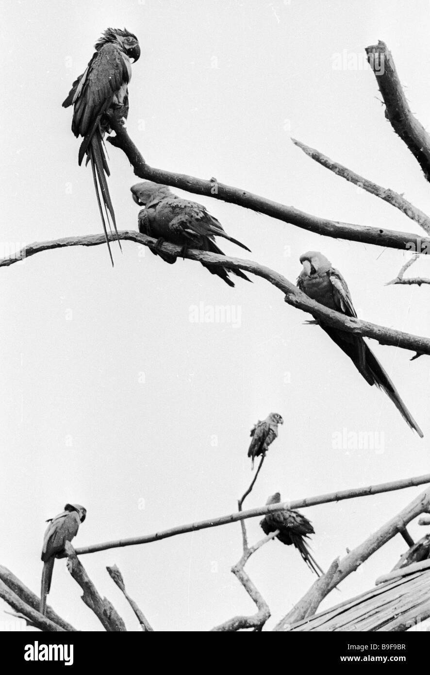 Papageien sitzen auf Ästen in der Legende-Park Stockbild