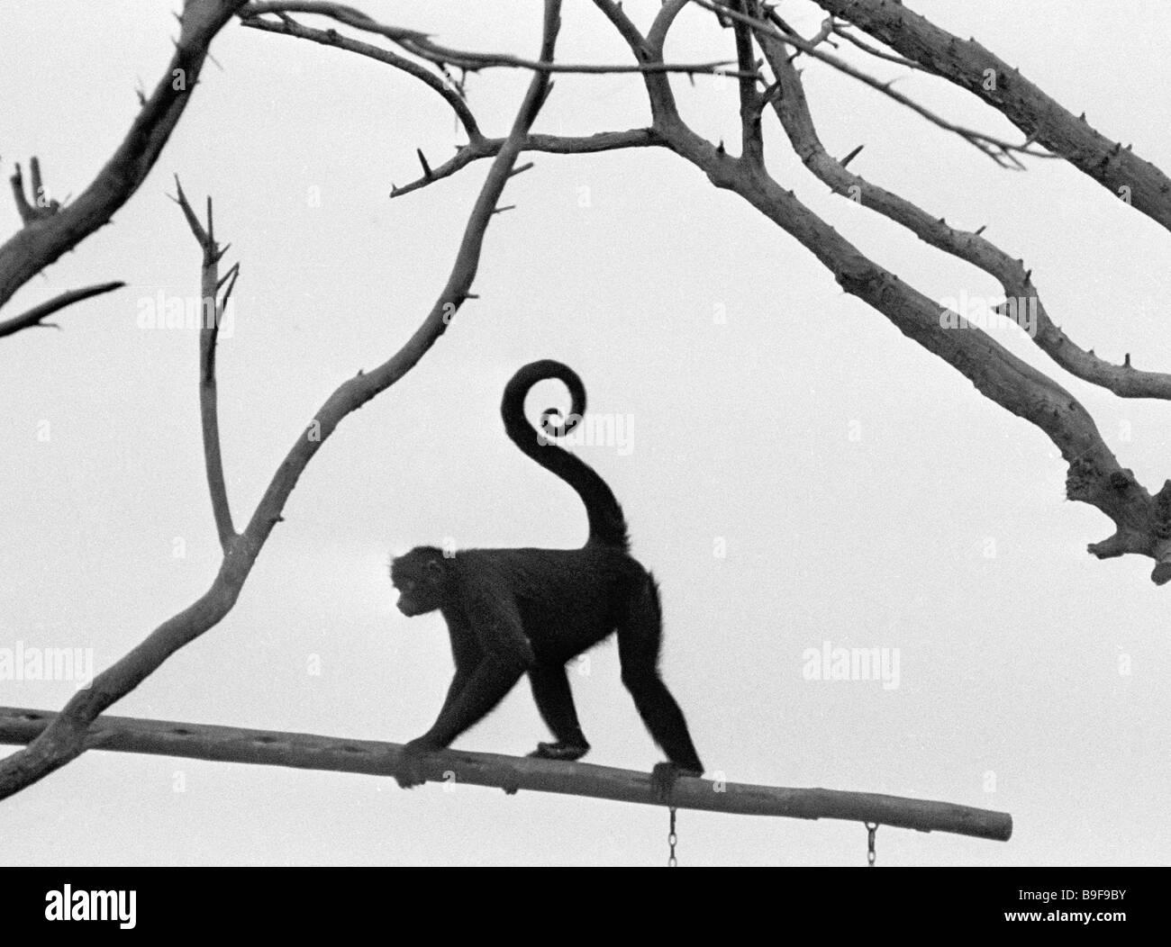 Affe aus der Legende Park Stockbild