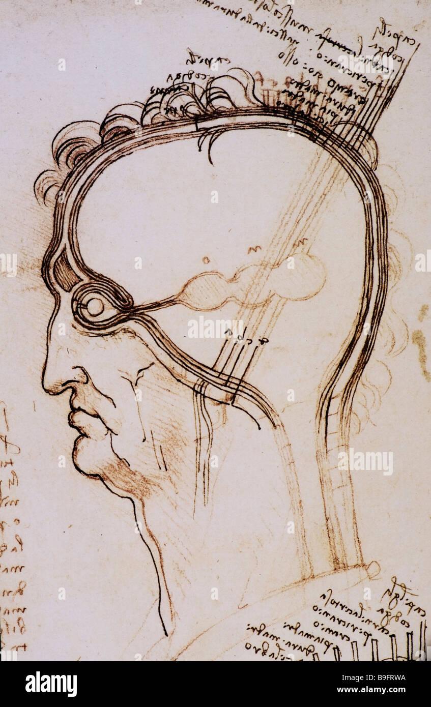 anatomische Studie der Schichten des Gehirns und der Kopfhaut von Leonardo da Vinci Stockbild