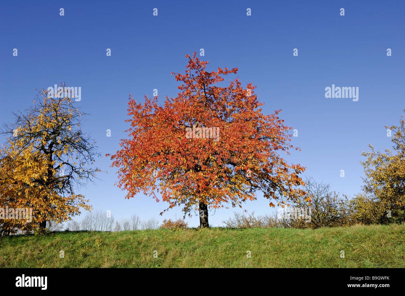 Großartig Herbst Färbung Ausdrucke Zeitgenössisch - Druckbare ...