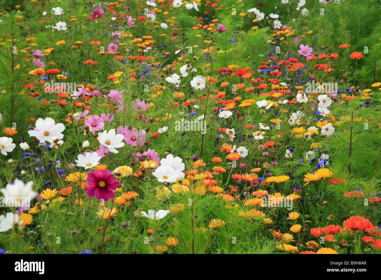 wiese wildblumen wiese wiese sommer blumenwiese blumen pflanzen