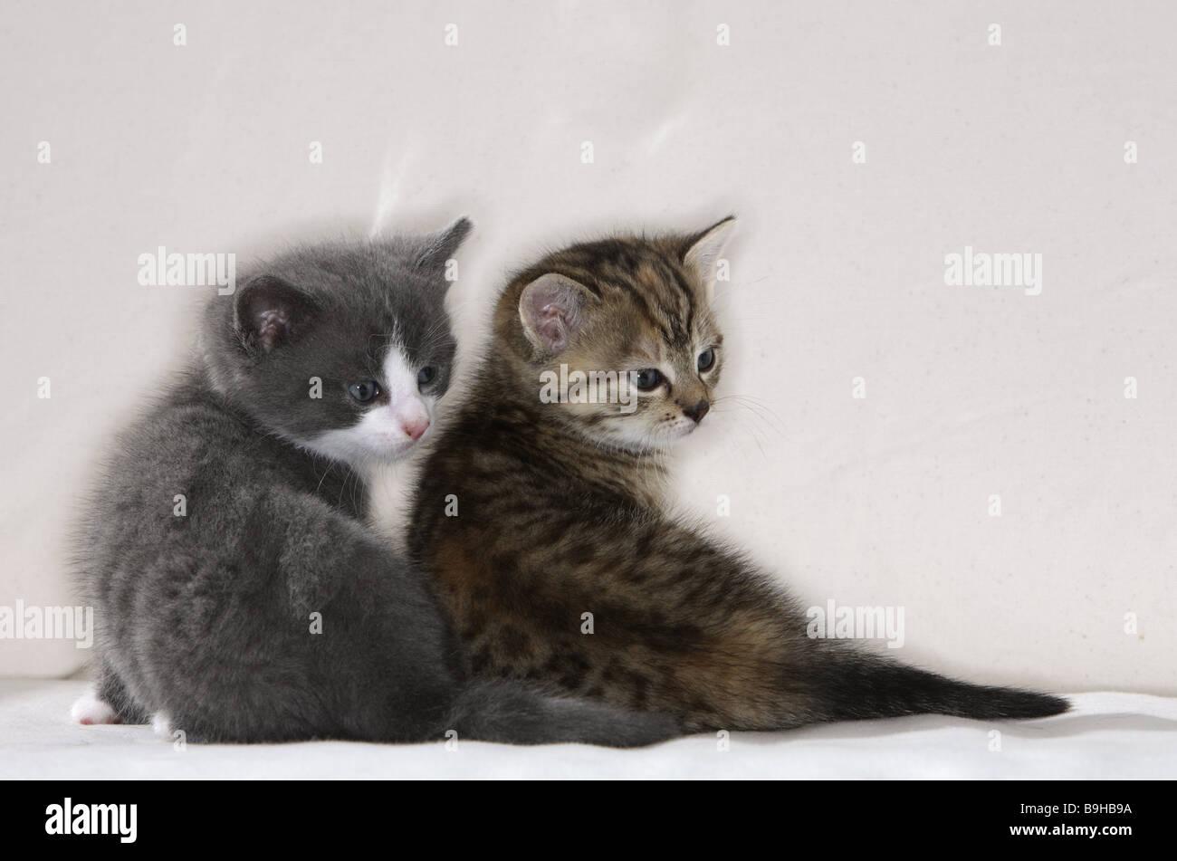sofa katzen junge nebeneinander sitzen zur ck blick schaut. Black Bedroom Furniture Sets. Home Design Ideas