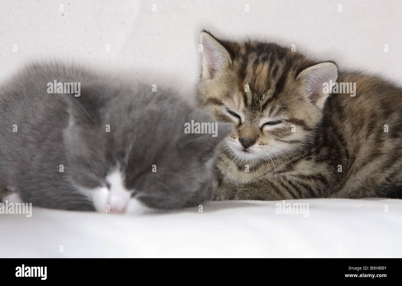 sofa katzen junge nebeneinander liegend kuschelt sich. Black Bedroom Furniture Sets. Home Design Ideas