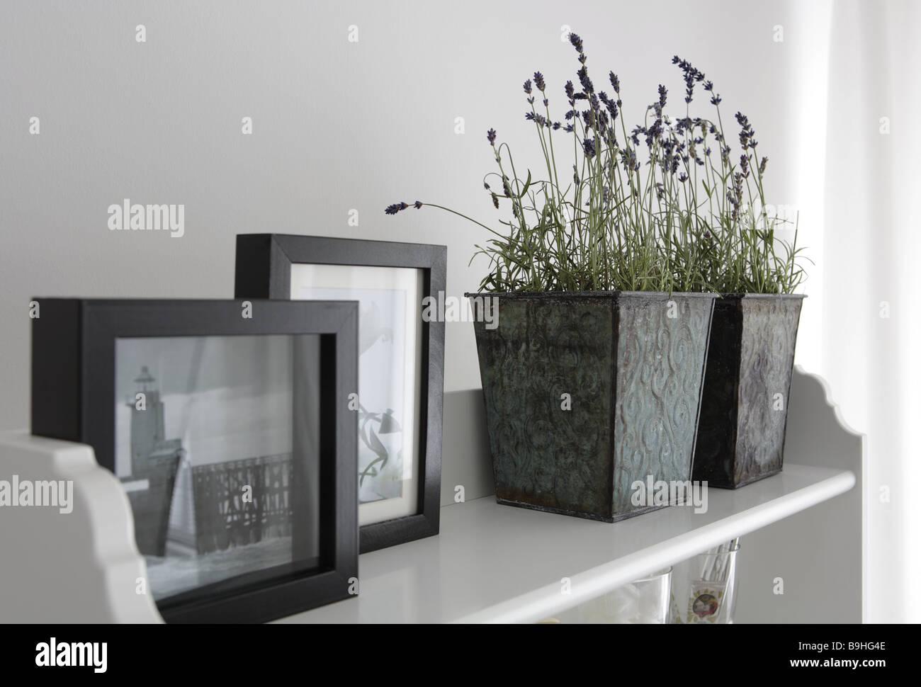 Still-Leben Regal Bilder Lavendel-Töpfe lebenden Innenraum ...