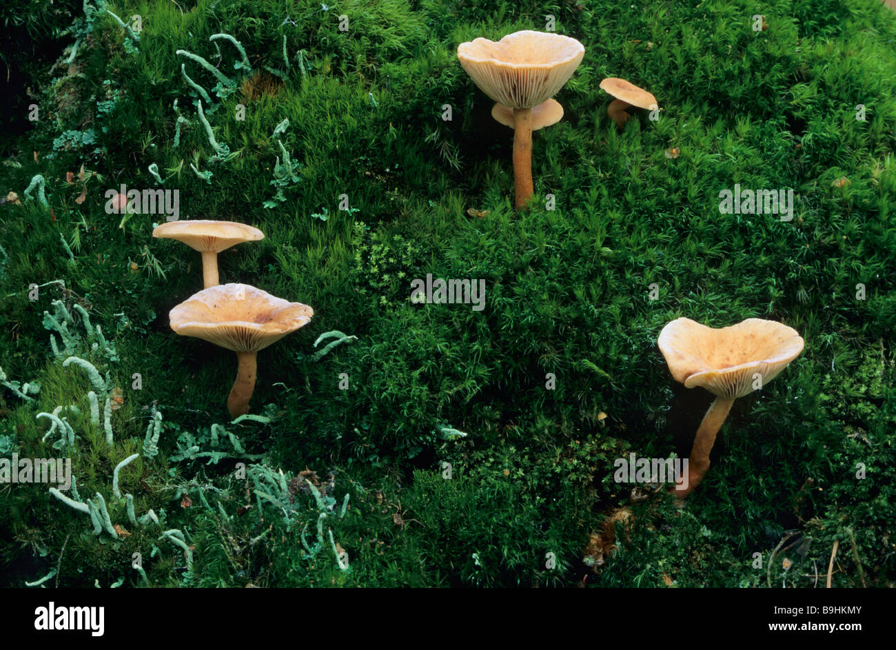 pilze auf moos stockfoto bild 23130939 alamy. Black Bedroom Furniture Sets. Home Design Ideas