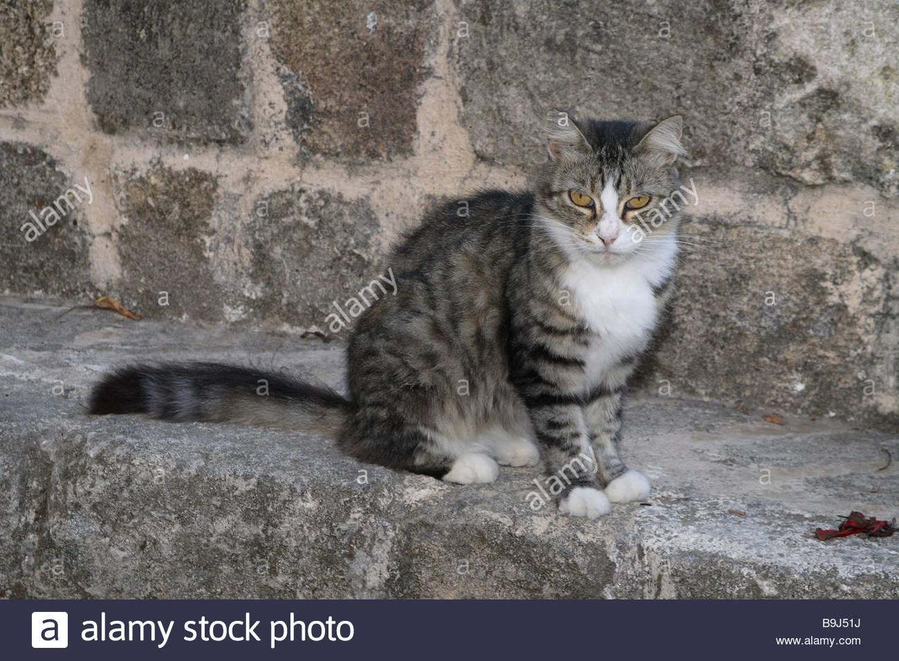 Animal Liver Stockfotos & Animal Liver Bilder - Alamy