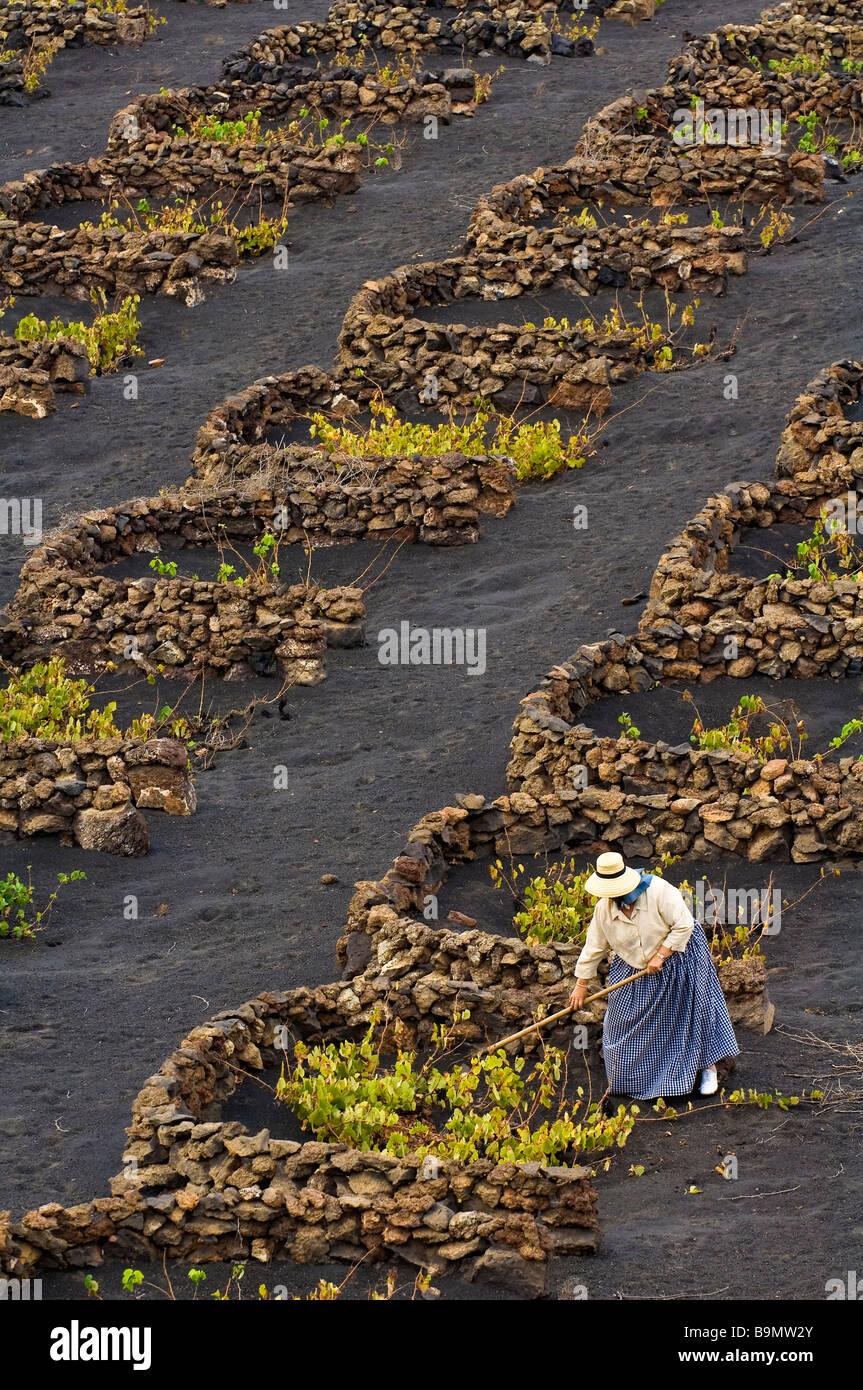 Biosphäre, Insel Lanzarote, Kanarische Inseln, Spanien reservieren, La Geria, Bauer arbeiten in den Weinbergen Stockbild