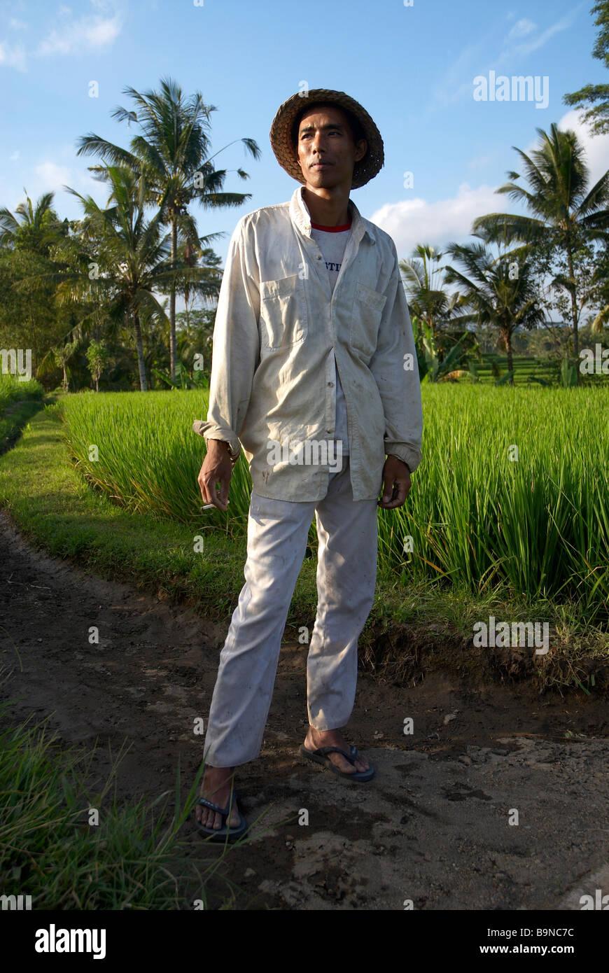 Balinesen Reis Landwirt Indonesien Stockbild