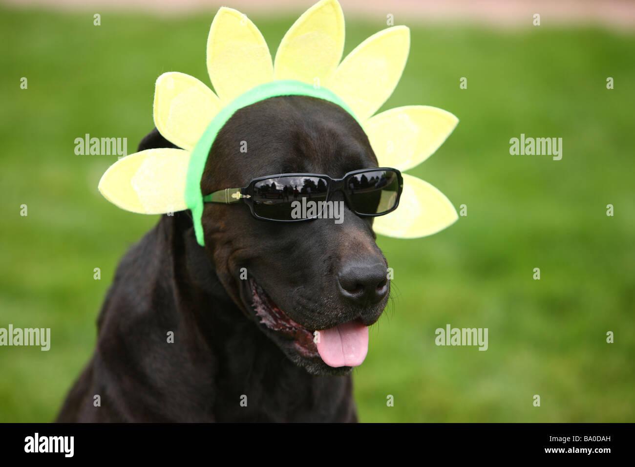 Hund mit lustigen Hut und Sonnenbrille Stockbild