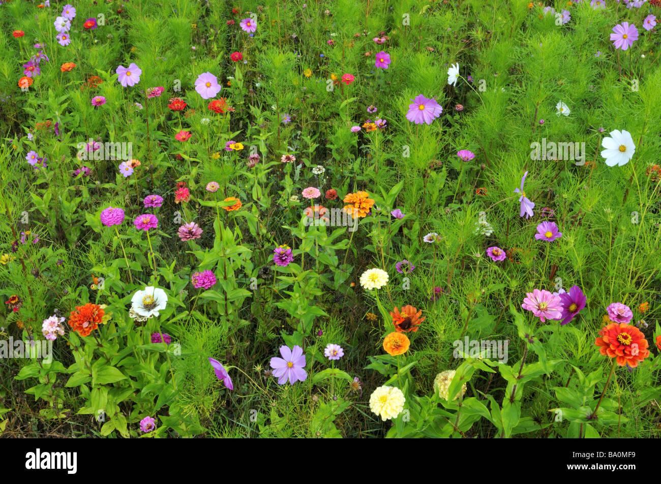 garden in september stockfotos garden in september bilder alamy. Black Bedroom Furniture Sets. Home Design Ideas