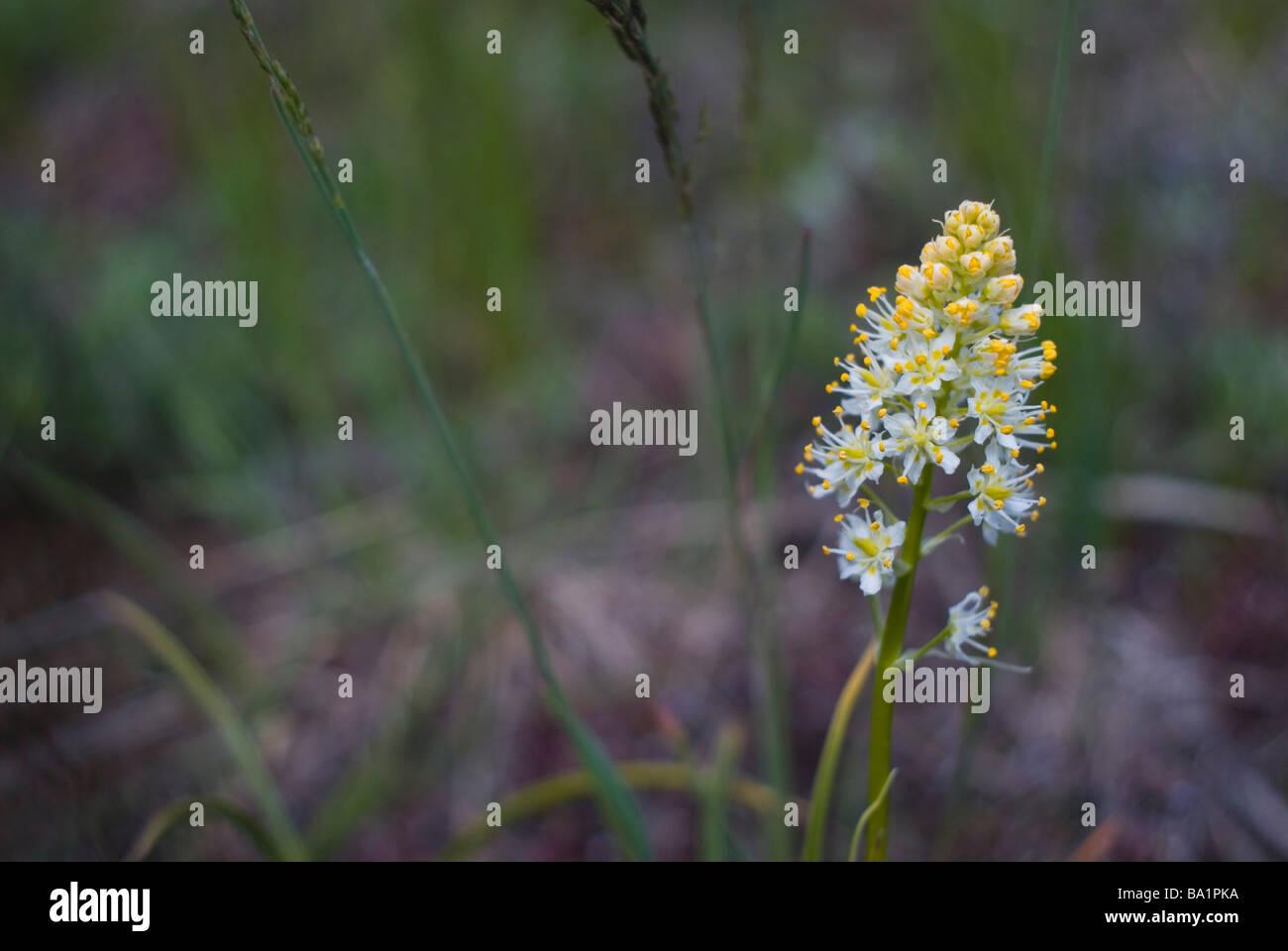 gelbe Wildblumen in den Bergen in der Nähe von Boulder Colorado Stockbild