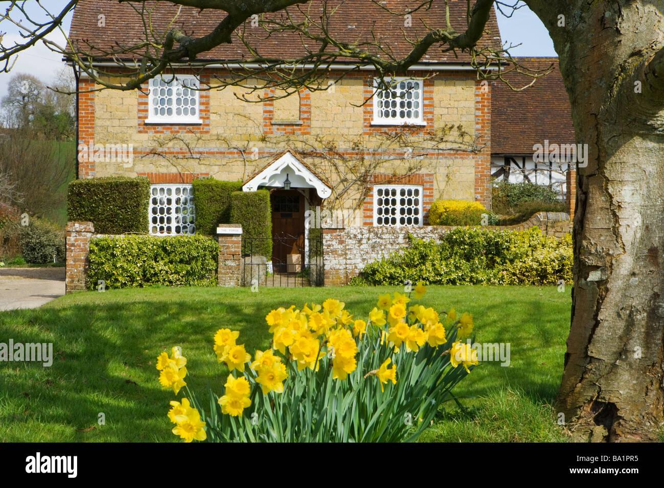 Ferienhaus und Narzissen. Shamley Green, Surrey, UK Stockbild
