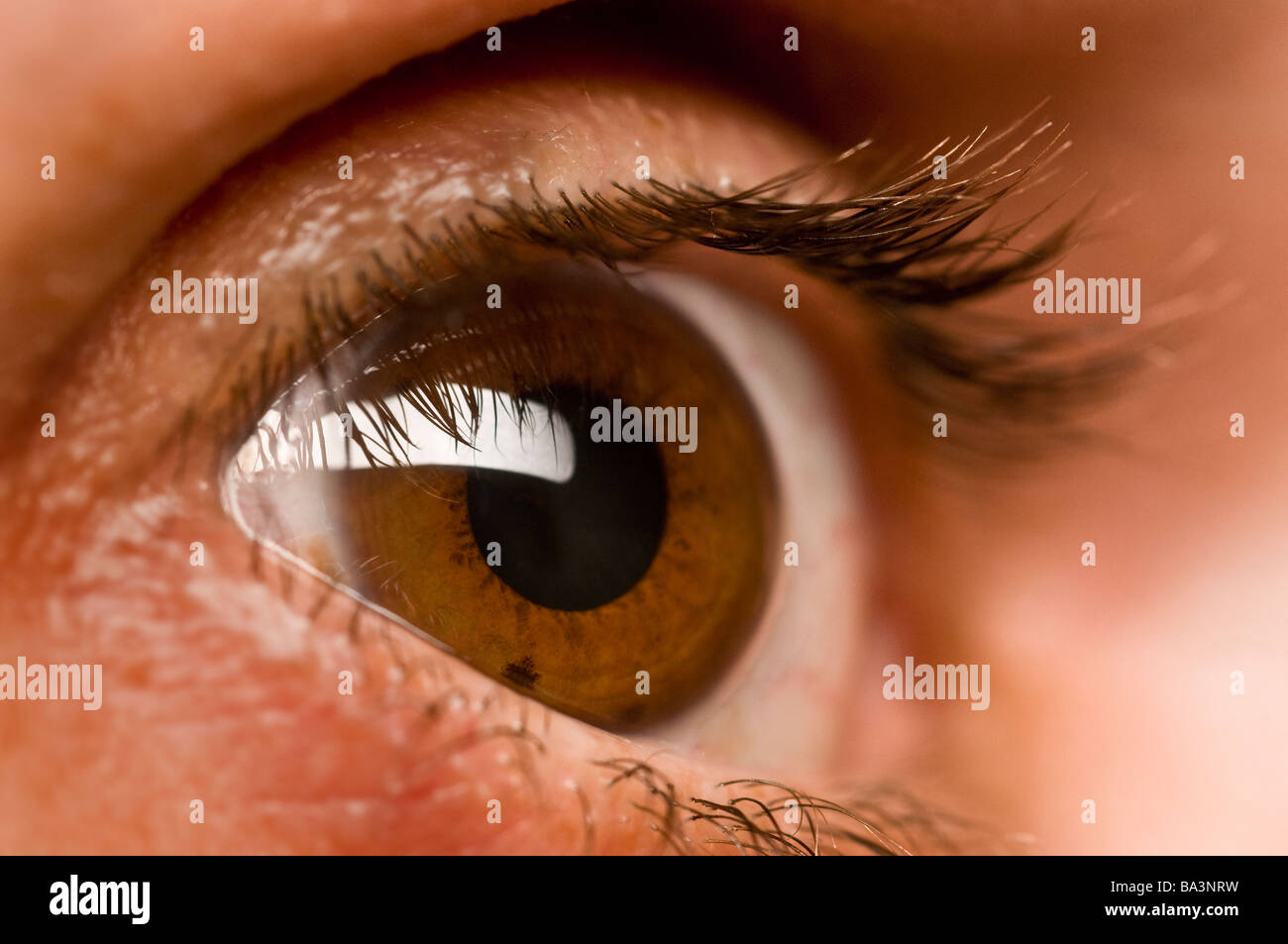 Auge Wimpern Stockbild