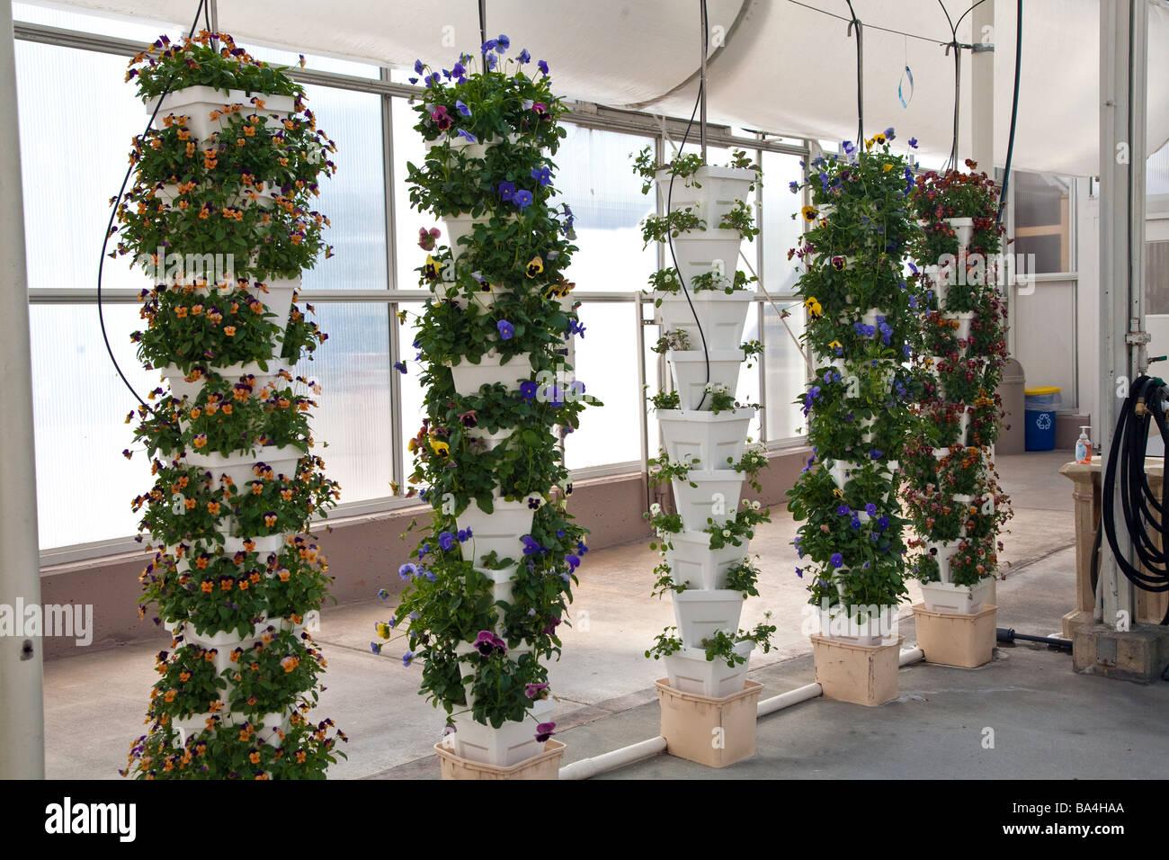 pflanzen obst und blumen angebaut wird in einer hydrokultur gew chshaus in florida usa. Black Bedroom Furniture Sets. Home Design Ideas