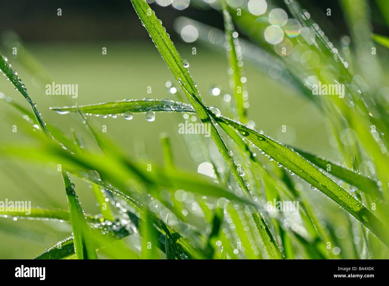 Grass und Tröpfchen Stockbild
