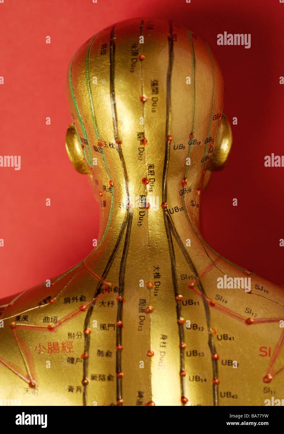 Model Human Head Acupuncture Points Stockfotos & Model Human Head ...