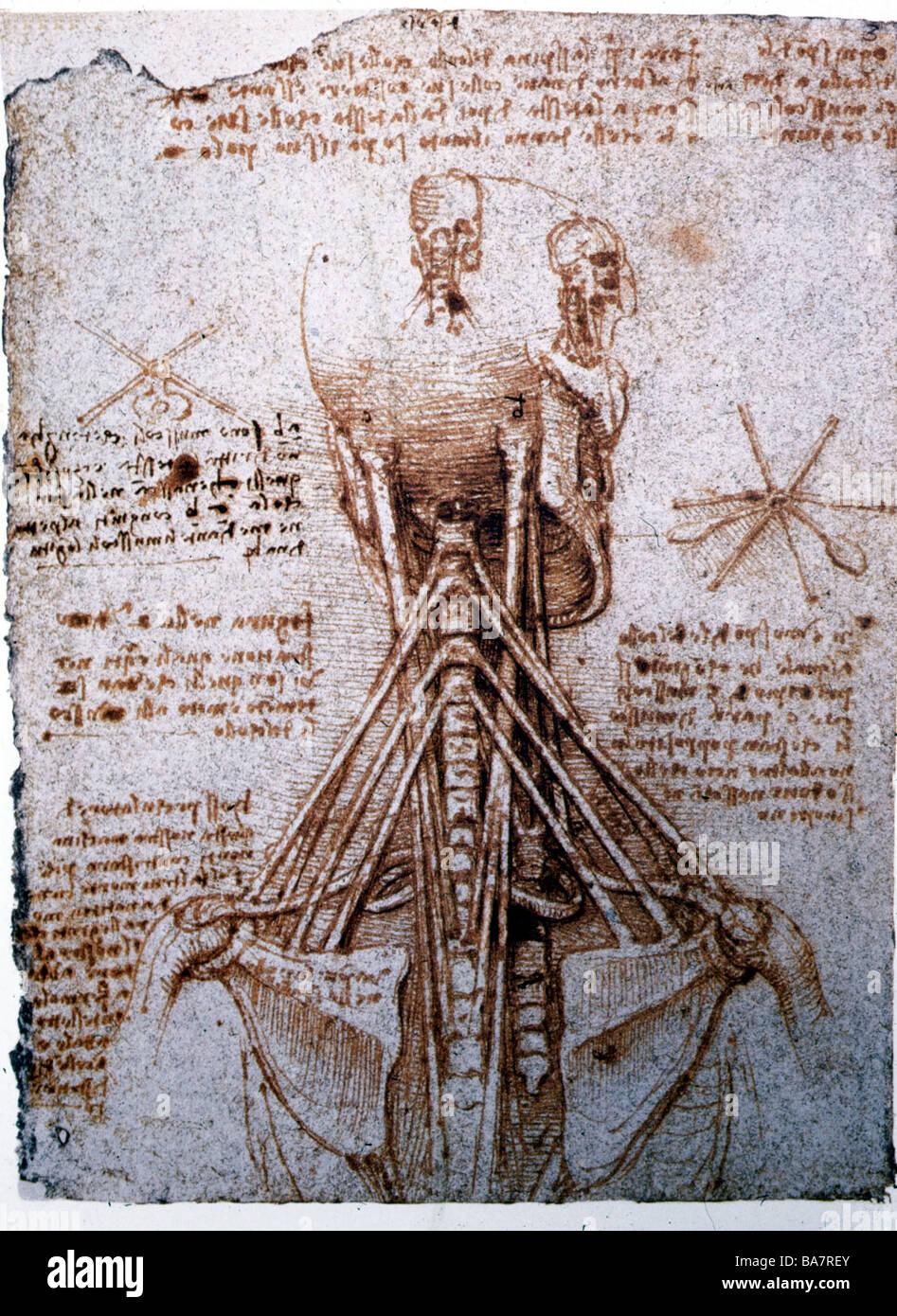 Groß Leonardo Da Vinci Anatomie Fakten Zeitgenössisch - Anatomie Von ...