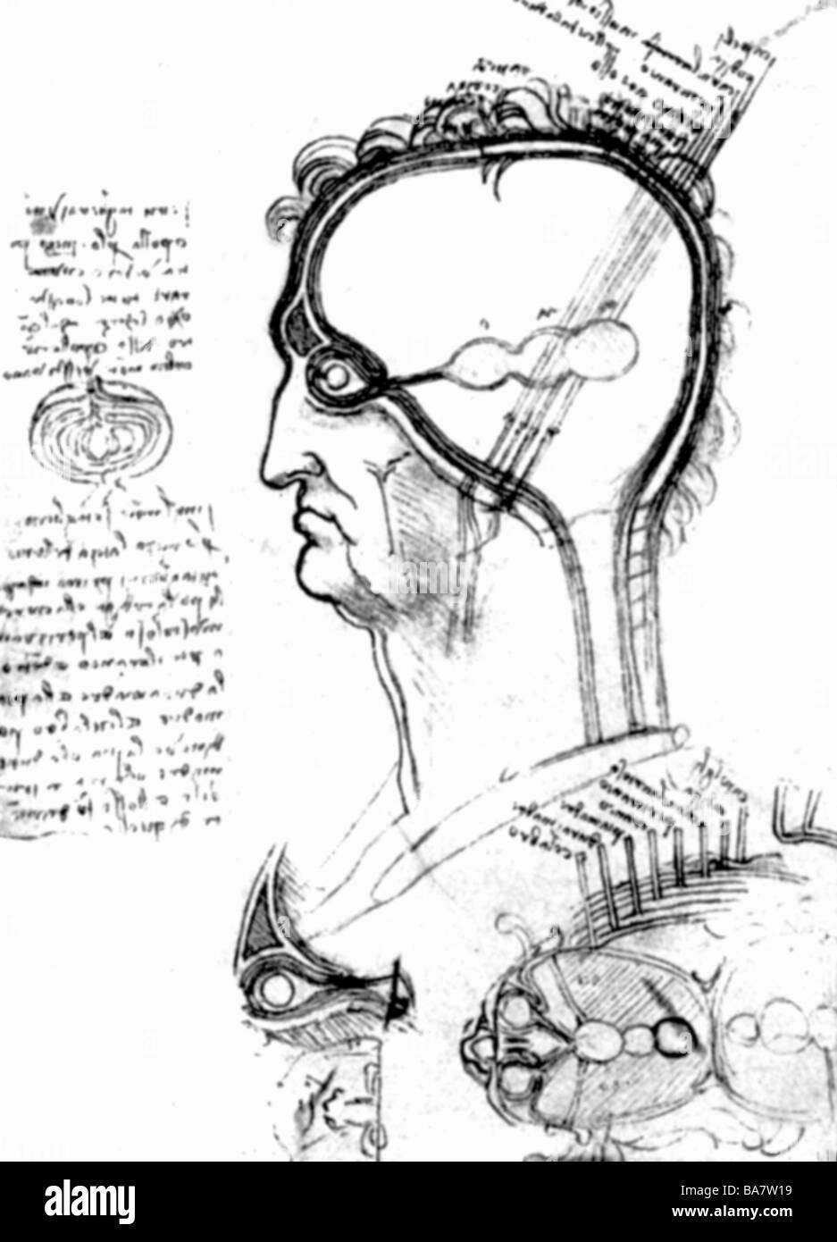 Leonardo da Vinci, 15.4.1452 - 2.5.1519, italienischer Künstler ...