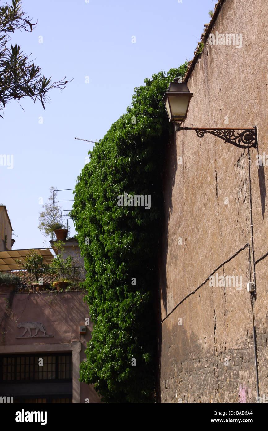 Alte Mauer Mit Kriechende Pflanze Und Street Lampe In Einer Strasse