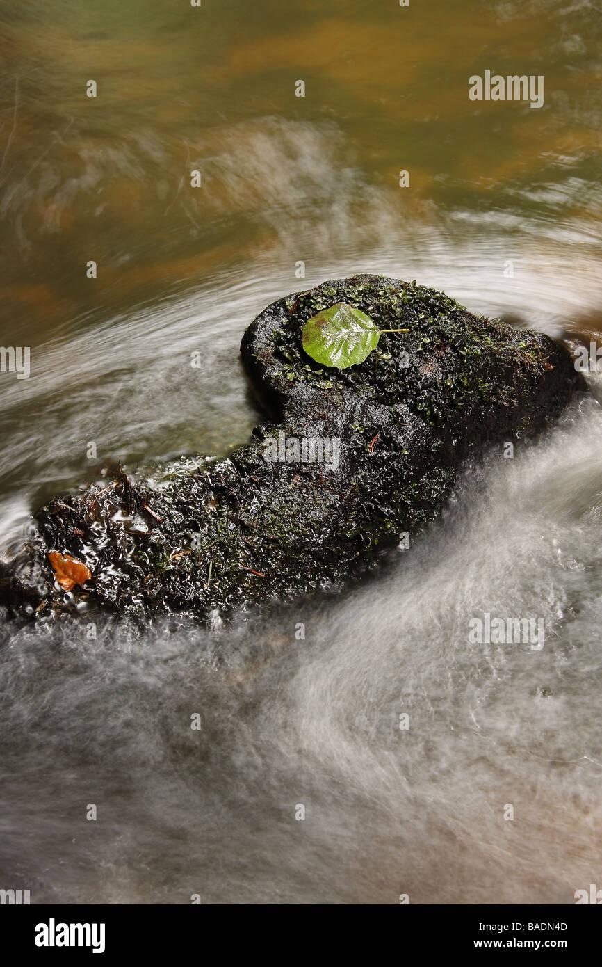 Ein dunklen bemoosten Felsen mit einem grünen Blatt darauf in der schnellen Strömung eines Waldes streamen Stockbild
