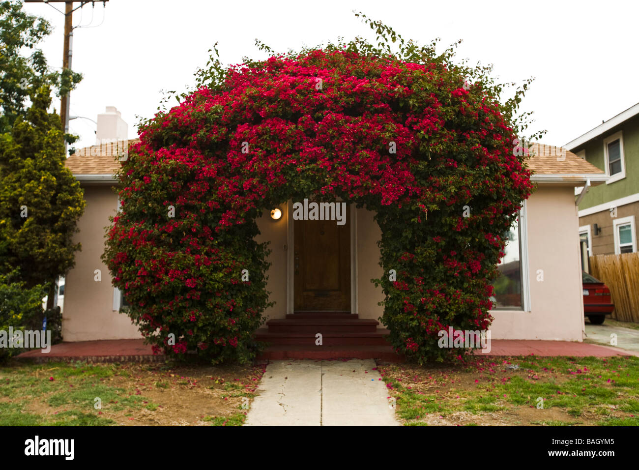 Rote Bougainvillea Busch Umgibt Haustur Hollywood Los Angeles County
