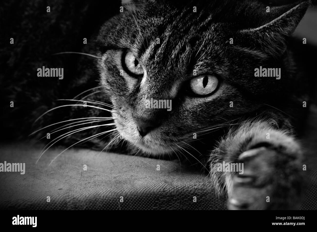 Liegende Katze Stockbild
