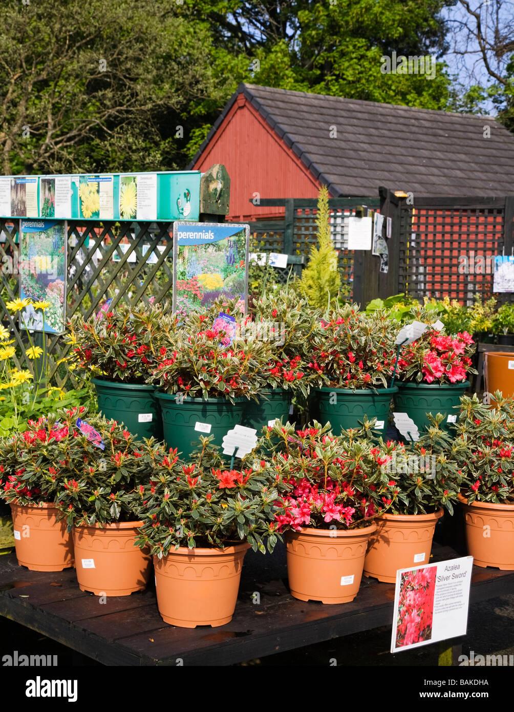 Pflanzen für den Verkauf in einem Garten-Center angezeigt. Stockfoto