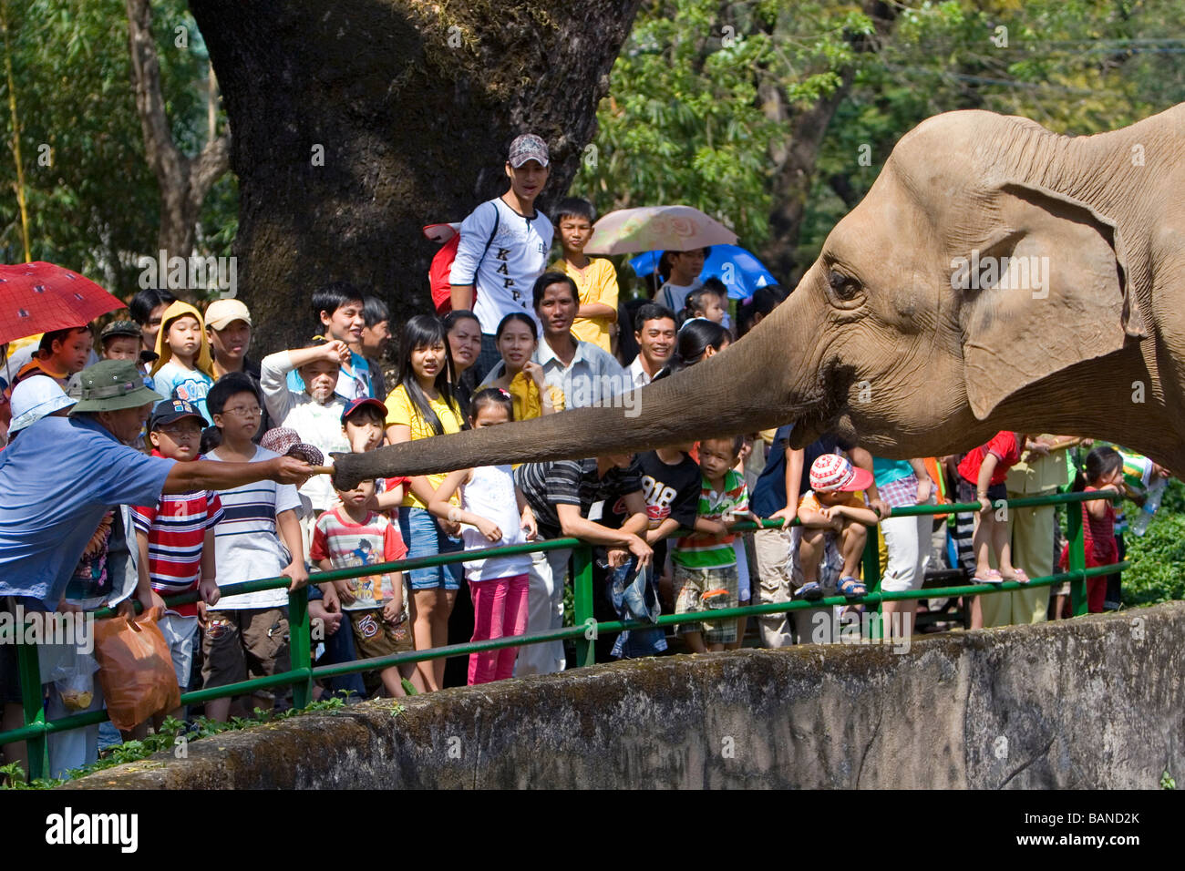 Besucher feed Zuckerrohr, eines asiatischen Elefanten im Saigon Zoo und botanische Gärten in Ho-Chi-Minh-Stadt Stockbild