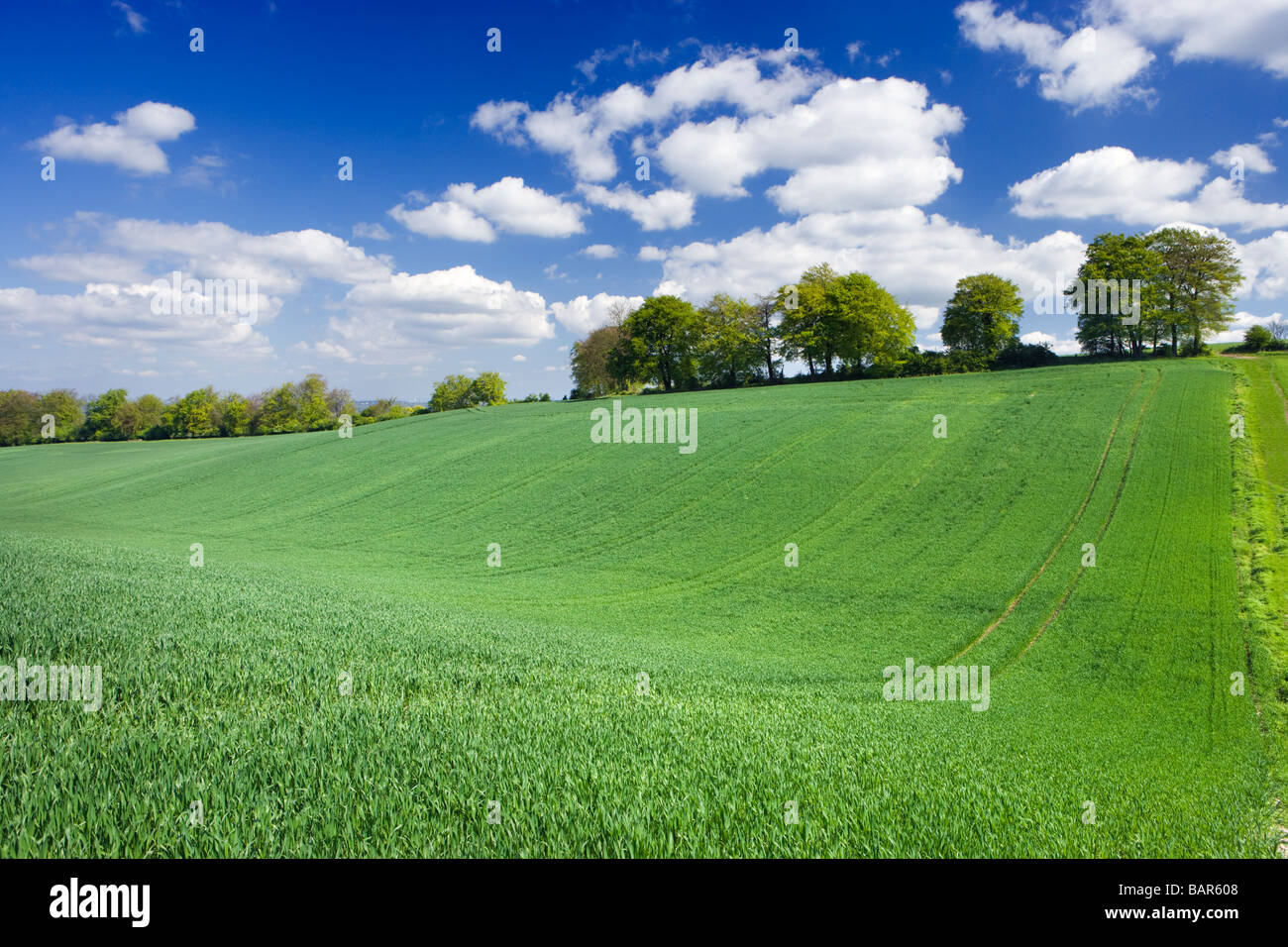 Feld-Hof mit jungen Ernte. Surrey, UK Stockbild