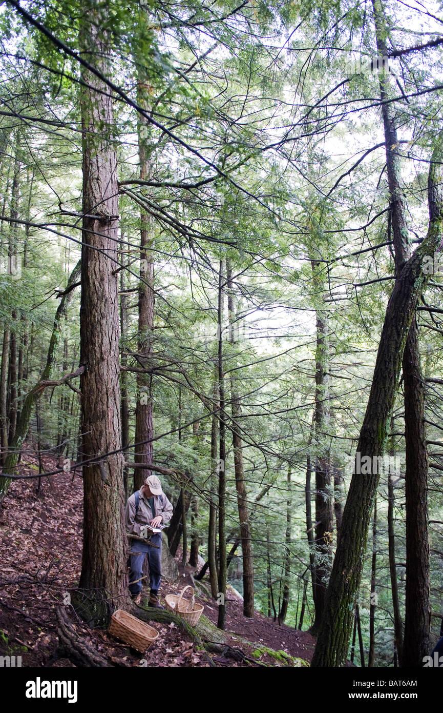 Ein Mann, die Teilnahme an einem Pilz Jagd in den Hügeln von Rosendale, NY prüft seine Notiz über Stockbild