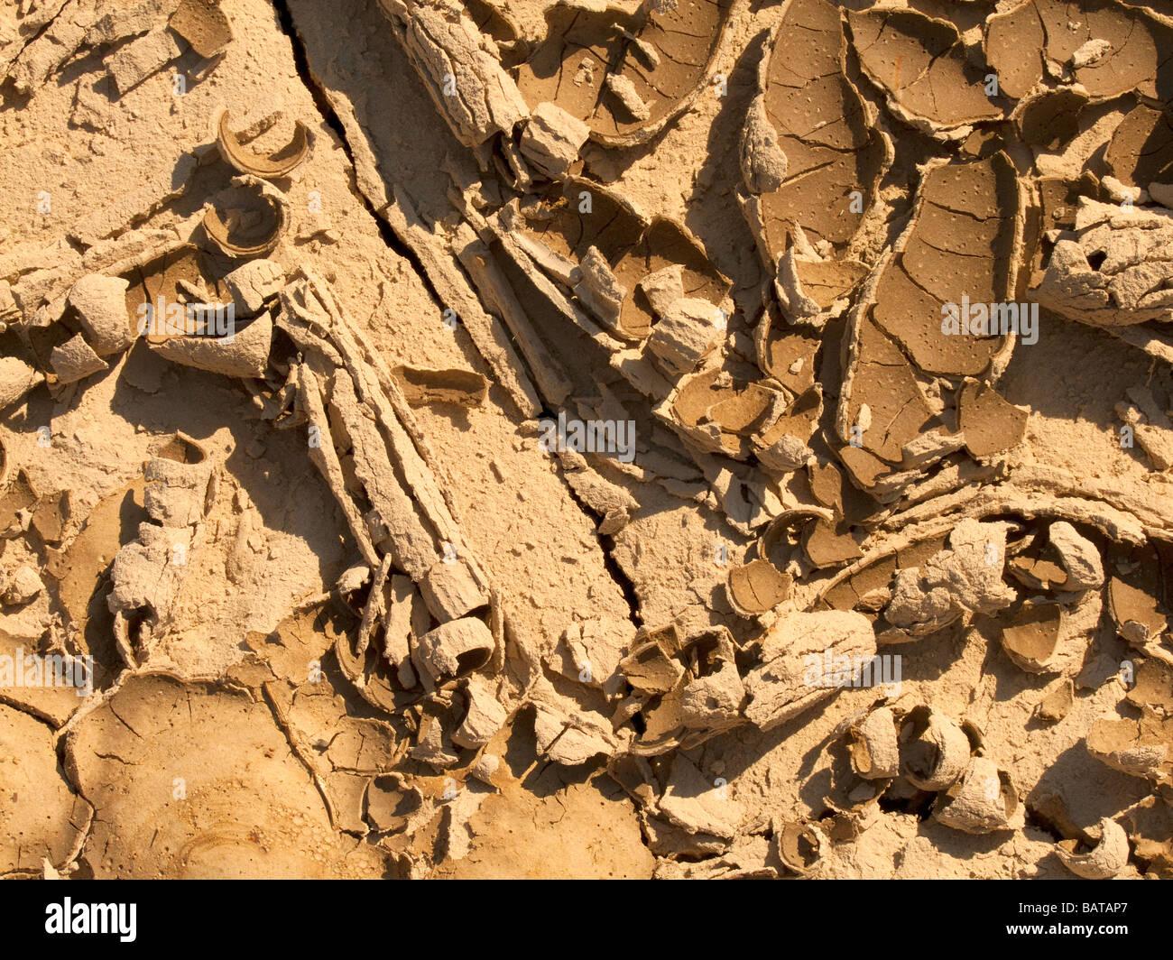 Boden Risse - Dürre - Extrem trockenes Wetter Stockfoto