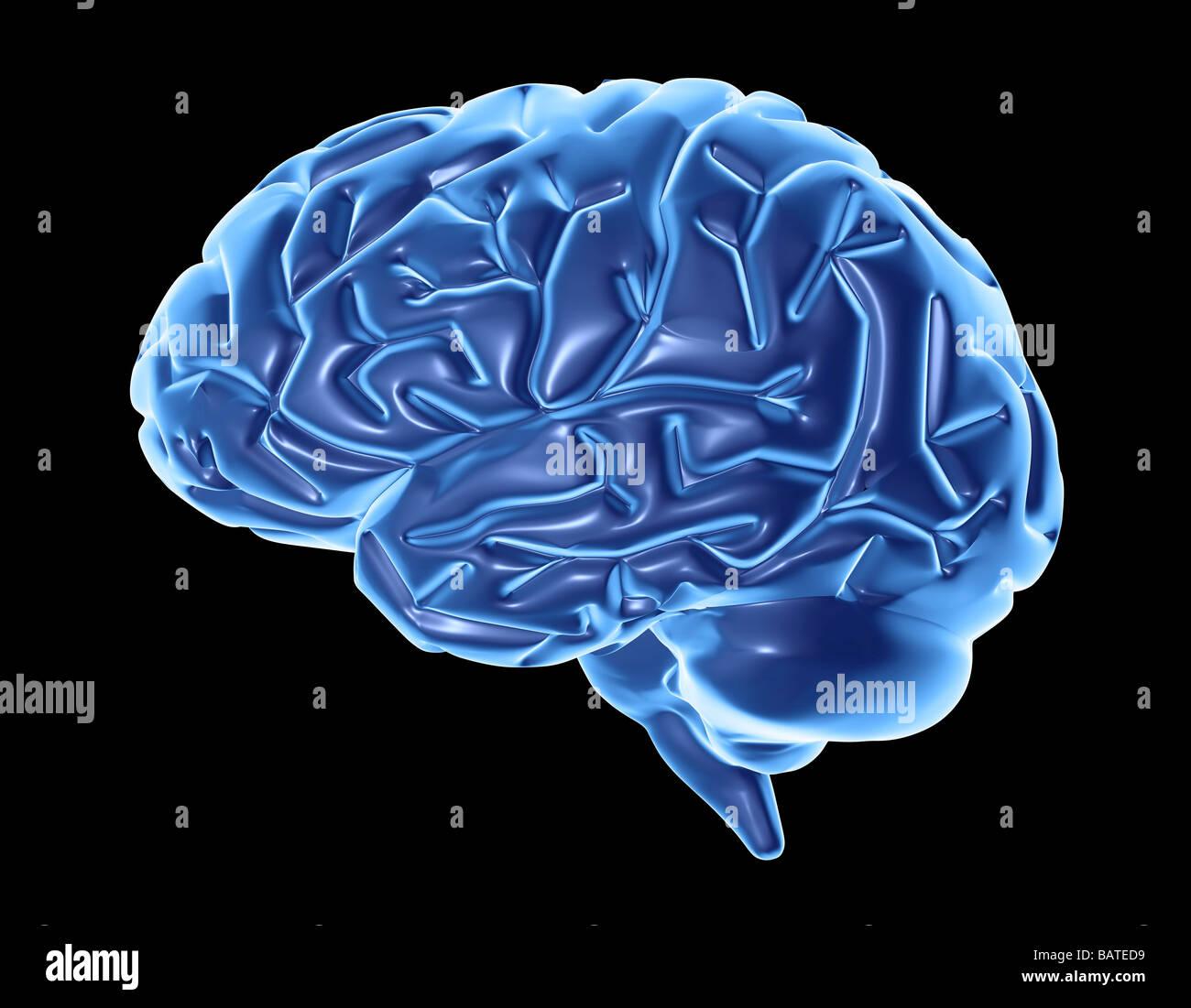 Menschliche Gehirn, Computer-Grafik. Die Vorderseite des Gehirns ist ...