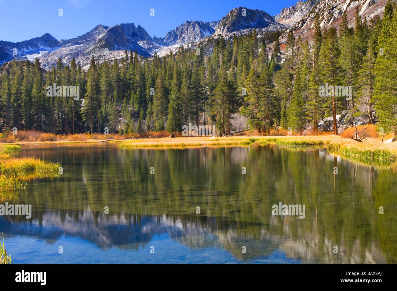 Lodgepole Kiefern säumen einen künstlichen See in der Sierra Mountains, Kalifornien. Stockbild