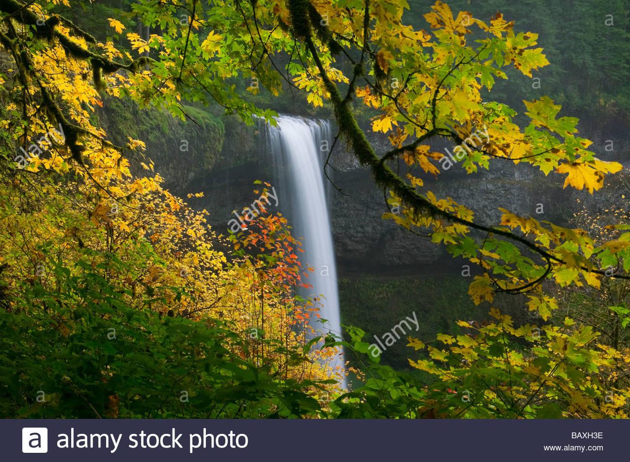 Süden Silver Falls, einer von mehreren malerischen Wasserfällen in Silver Falls State Park, Oregon, ist Stockbild