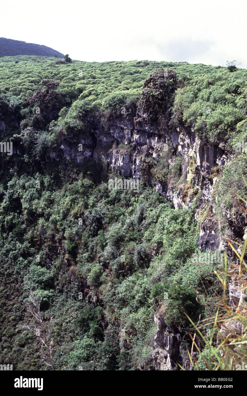 Galapagos-Inseln. Insel Santa Cruz. Grube Krater im Bereich Los Gemelos. Stockbild