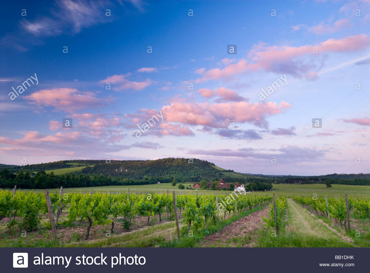 Denbies Weinberg und Wine Estate, Dorking, Surrey, England. Stockbild