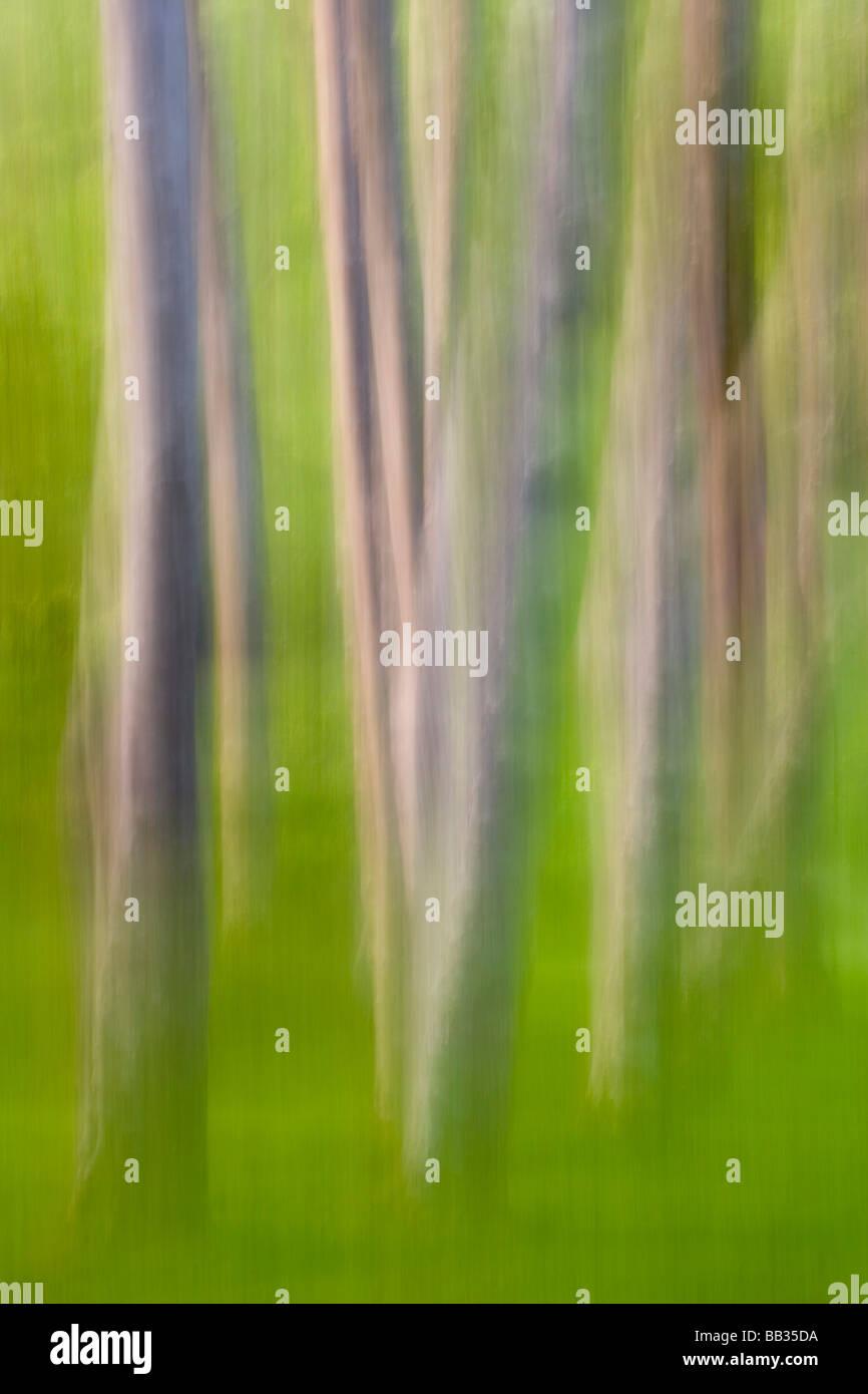 Erle Baum abstrakt. Stockbild