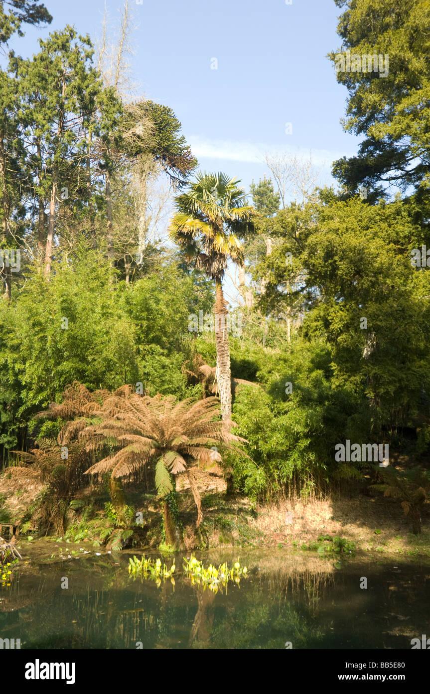 Die verlorenen Dschungel Lost Gardens of Heligan Cornwall UK Stockfoto