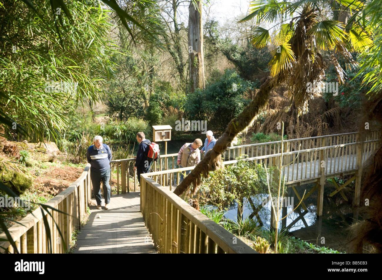 Die verlorenen Dschungel Lost Gardens of Heligan Cornwall UK Stockbild